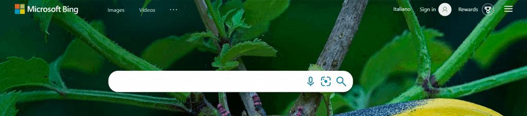 Alternative Search Engine Bing